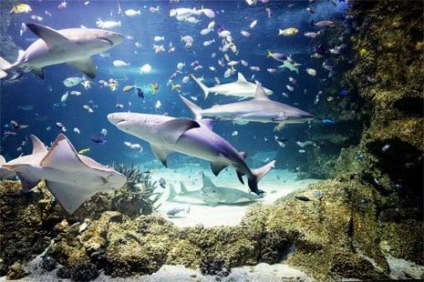 Shark HQ Sydney