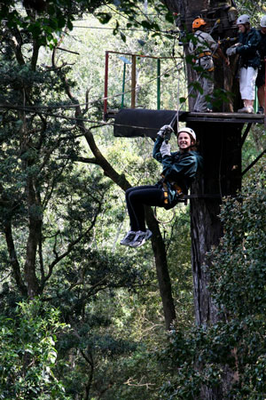 In the tree tops