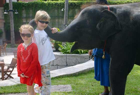 Phuket Elephants