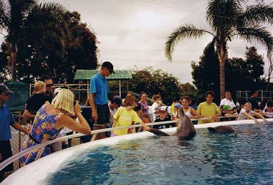 Pet Porpoise Pool Coffs Harbour