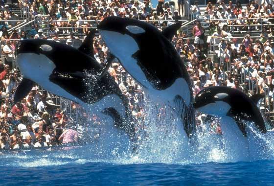 Dolphins Orange County
