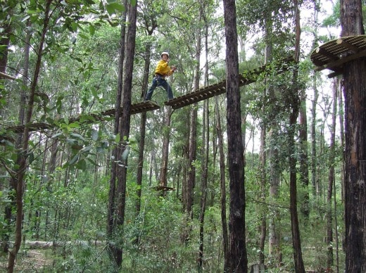 Treetop Adventure Land Central Coast NSW