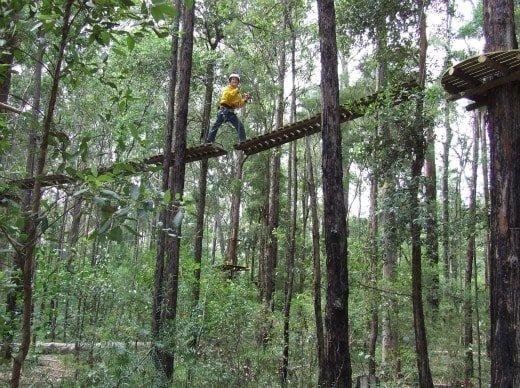 Treetop Adventure Land Central Coast NSW