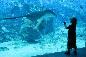 Dazzling Underwater Dubai