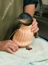 Little Penguin in a custom-knit jumper