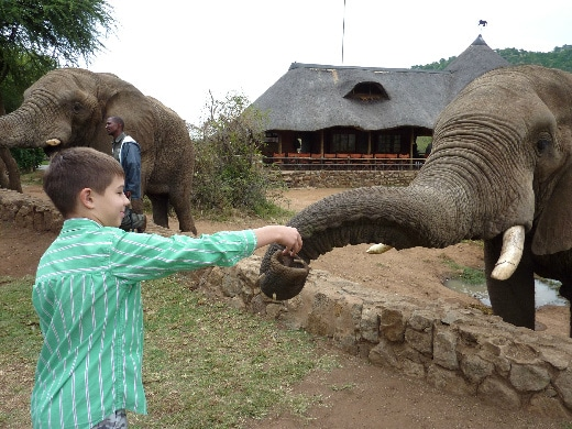 South Africa Harry feeds the elephants at Sun City