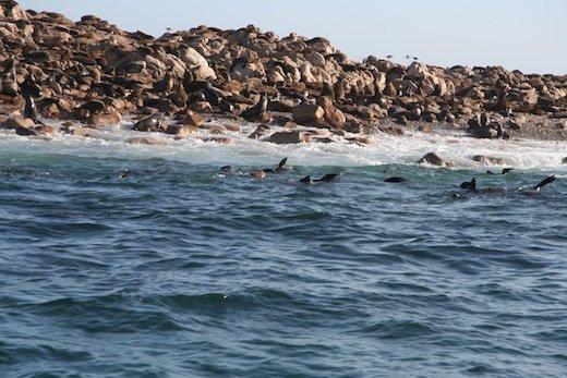 South Africa Shark Alley Gansbaii