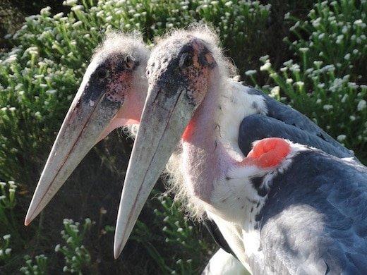 South Africa Tenikwa Wildlife Awareness Centre