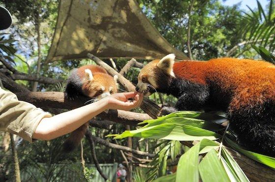 Moreton Bay Alma Park Zoo