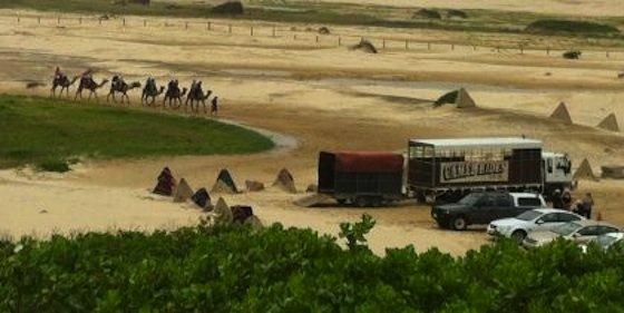 Camels on Birubi Beach