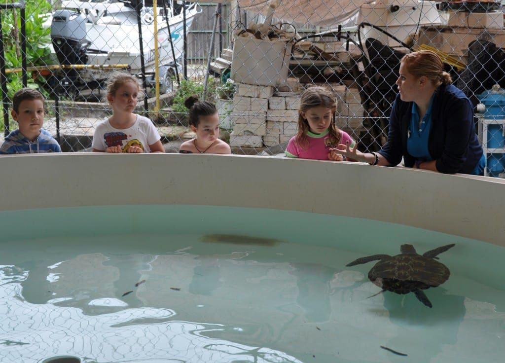 New turtle hospital Fitzroy Island in Far North Queenslad