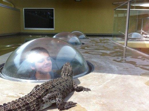 NT BEn and croc