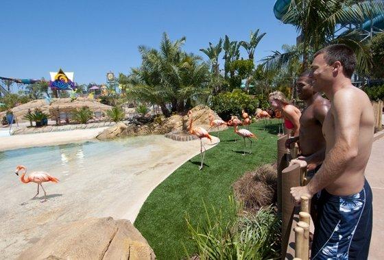 Flamingo Exhibit Mike Aguilera/SeaWorld San Diego