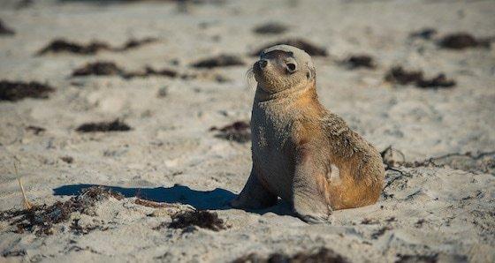 Baby at Seal Bay