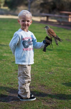 Lachlan holds a falcon