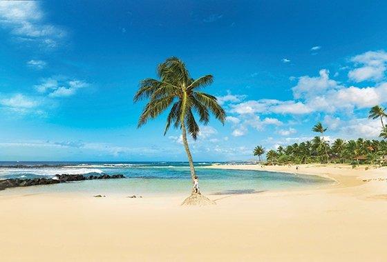 Poipu-Beach-Kid_PalmTree_560x380