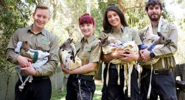 Keepers + Joeys – Featherdale Wildlife Park