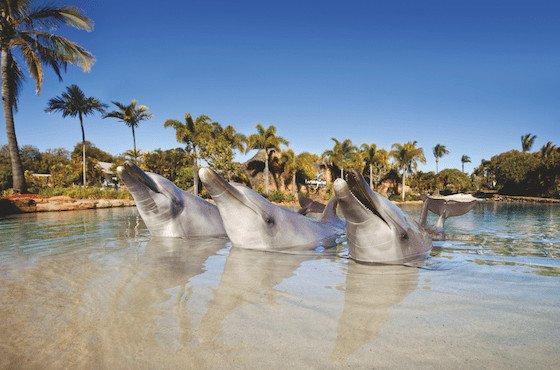Image: Sea World, Gold Coast