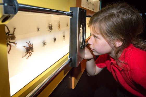Questacon SPIDERS launch - Monday, 23 November 2015