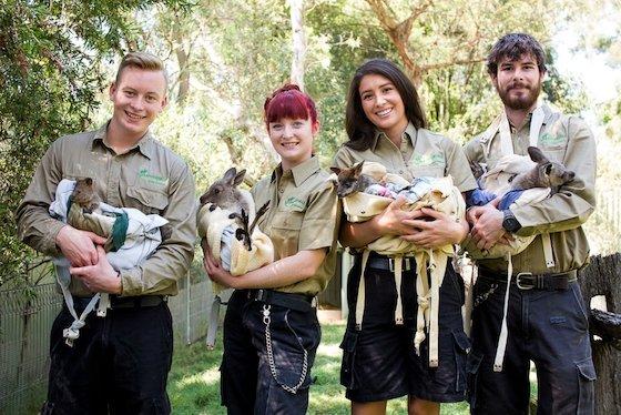 Keepers + Joeys - Featherdale Wildlife Park