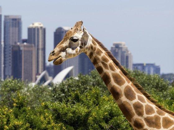 Taronga Zoo Image: iStock