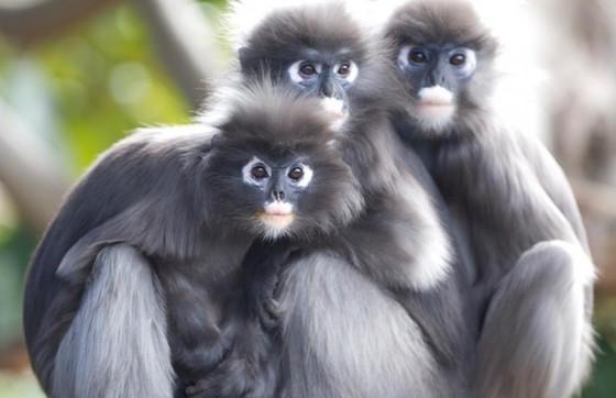 Vacation care SA Zoo