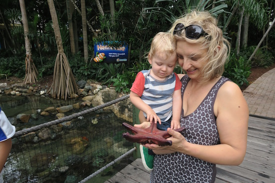 Living Reef tour on Daydream island