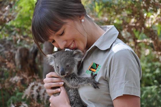 koala-baby-with-keeper