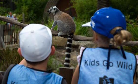 mz-kidsgowild-2016-lemurs