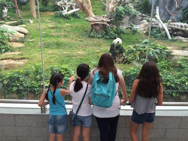 watching the pandas have breakfast at the Panda Pavillion