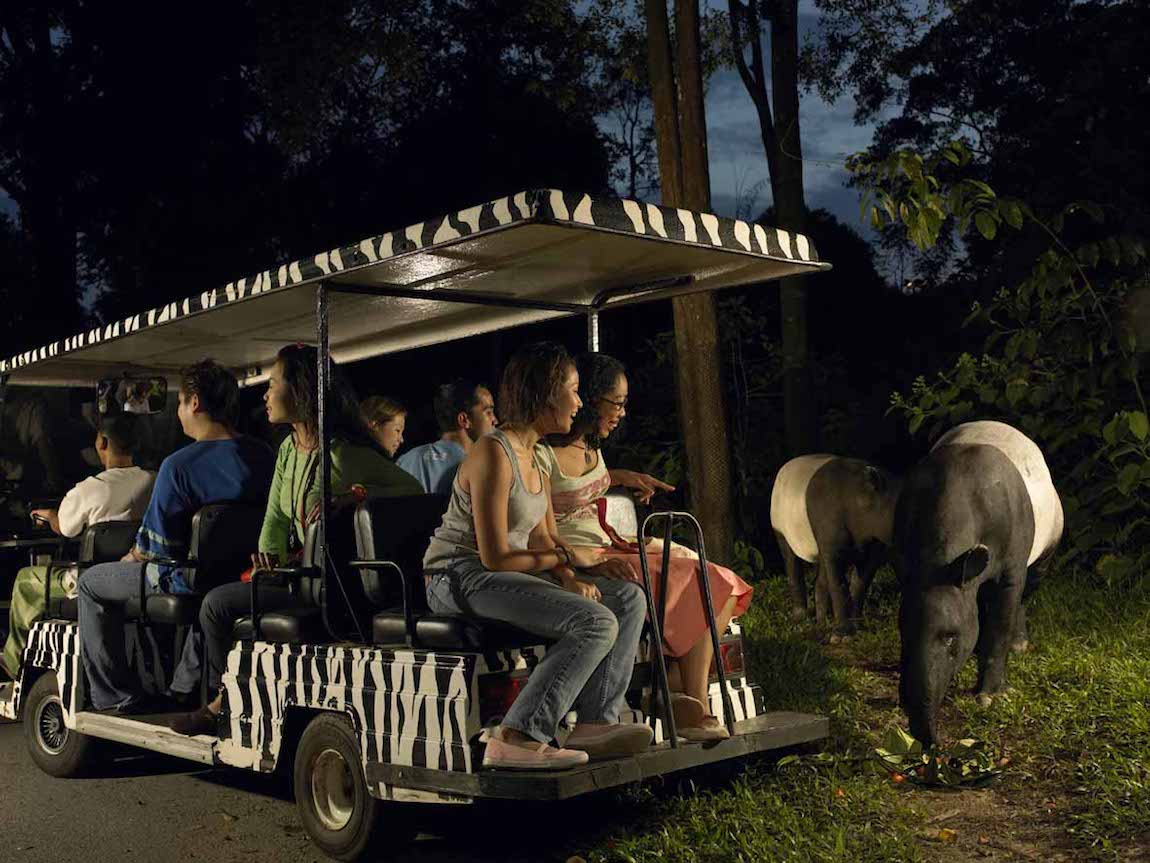 dont-miss-the-night-safari-credit-singapore-tourism