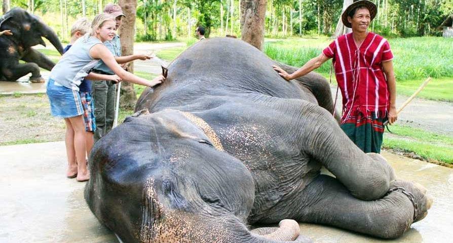 Elephant Hills washing elephants_6279 credit Deborah Dickson-Smith