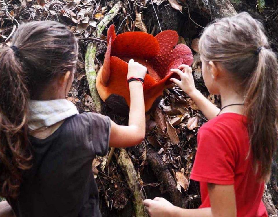 Rafflesia Gunung Gading