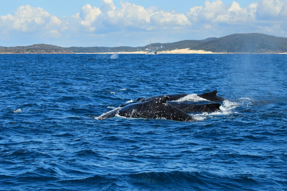 A pod of whales in the ocean