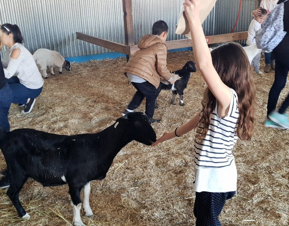 Calmsley City farm