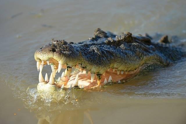 croc adventures with kids in queensland