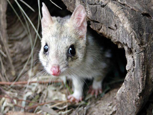 wildlife favourites with kids in tasmania