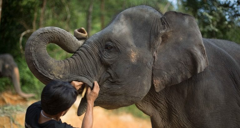 See an elephant get a check up at Phang Nga Elephant Park FEATURE