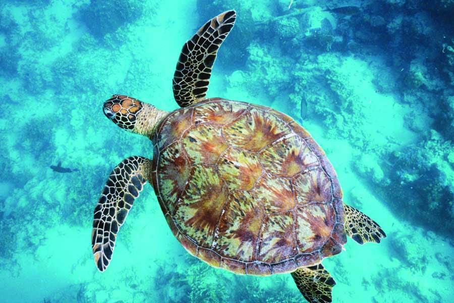 a green sea turtle. image ariki adventures