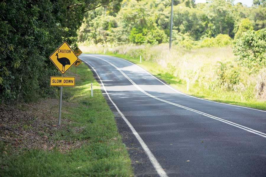 a sign warning of cassowaries at mission beach. image tourism and events queensland