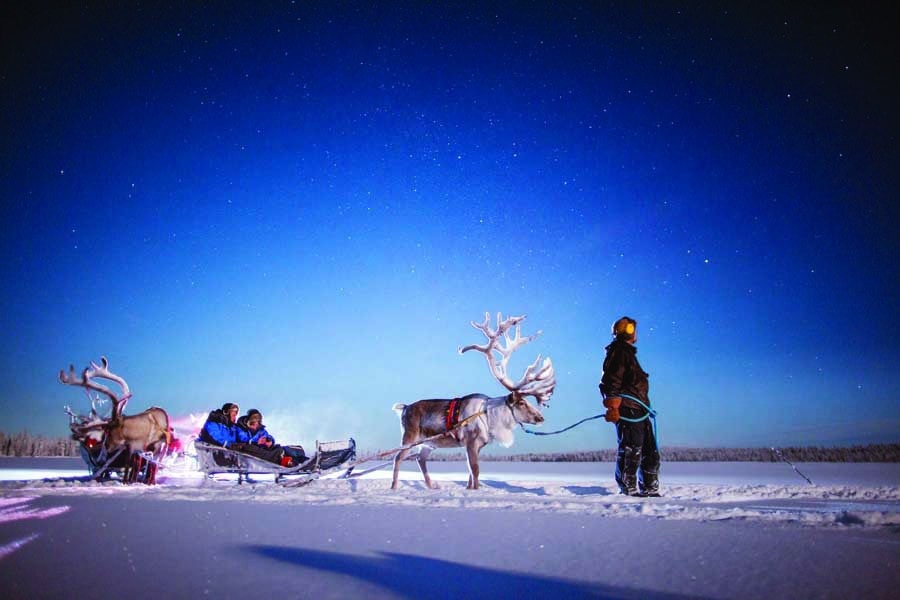 harriniva hotels safaris reindeer 12