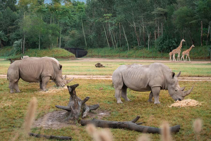australia zoos african savannah