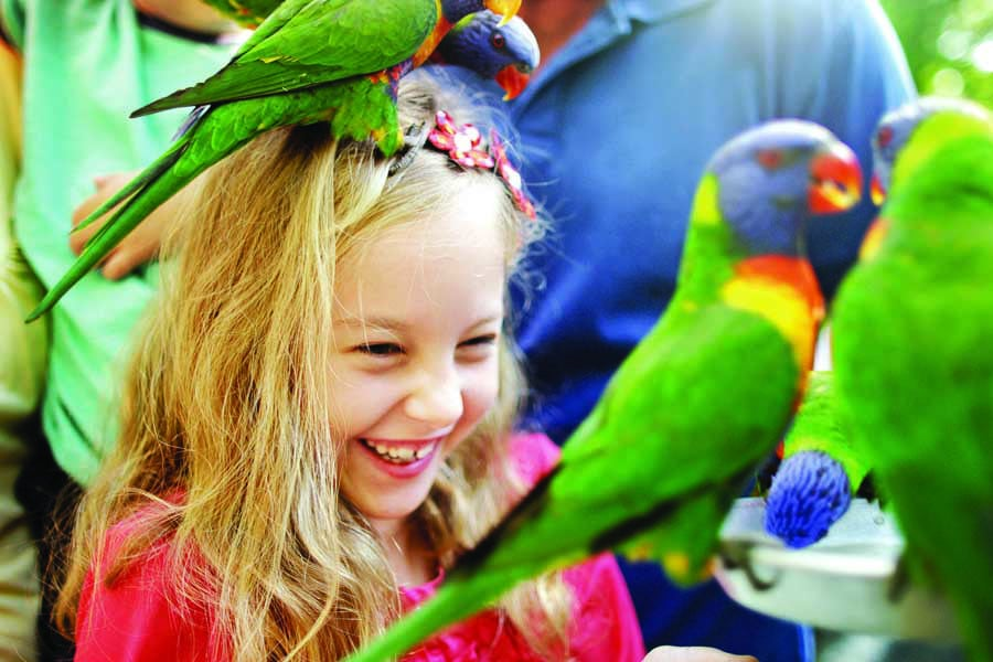 a little girl at currumbin wildlife sanctuary. image tourism and events queensland