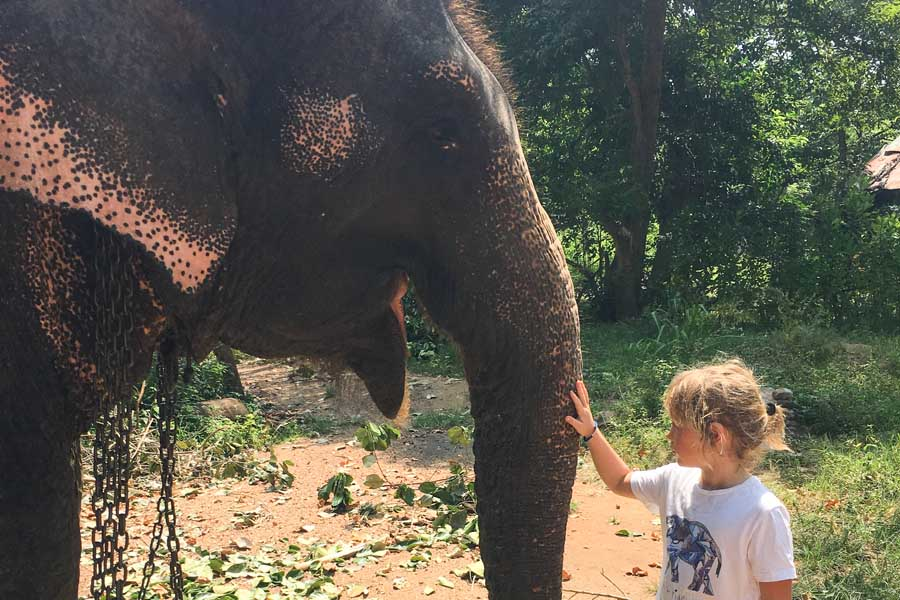emmie giving some kindness to a chain ele. please dont ride elephants