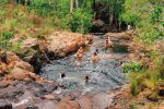 feature buley rockhole in litchfield national park. image tourism nt lucy ewing
