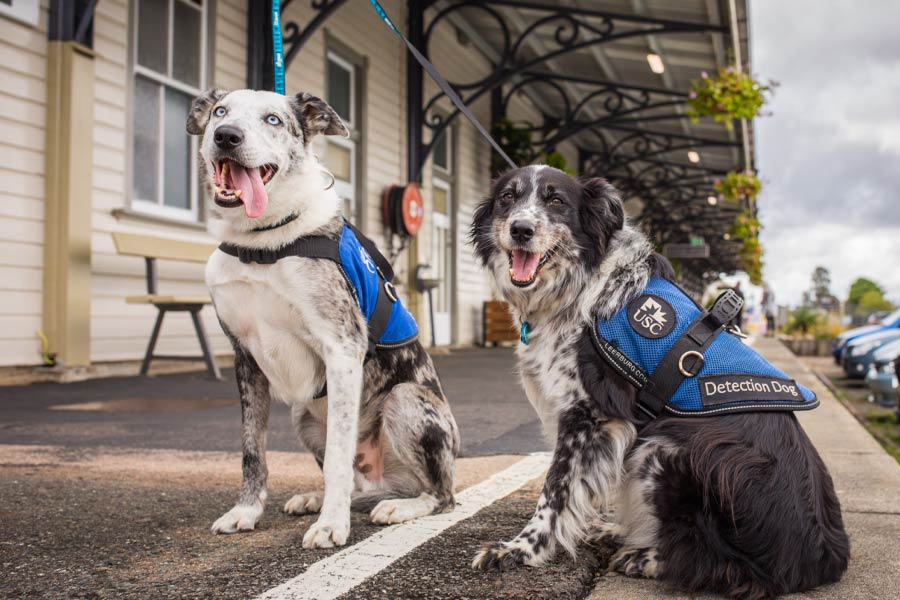 mary valley rattler steam train welcomes pets onboard2