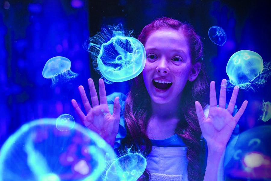 see jellyfish at seaworld on the gold coast