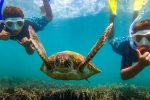 feature marine life is abundant