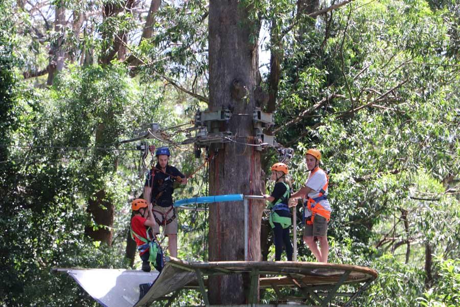 img 0152 illawarra fly treetop adventures