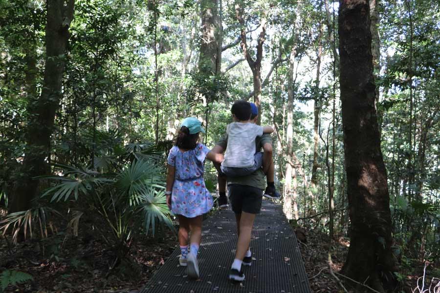 img 0194 minnamurra rainforest